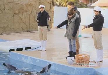 與海豚同樂